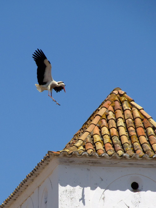 photo: Atterrissage. Cigogne agile